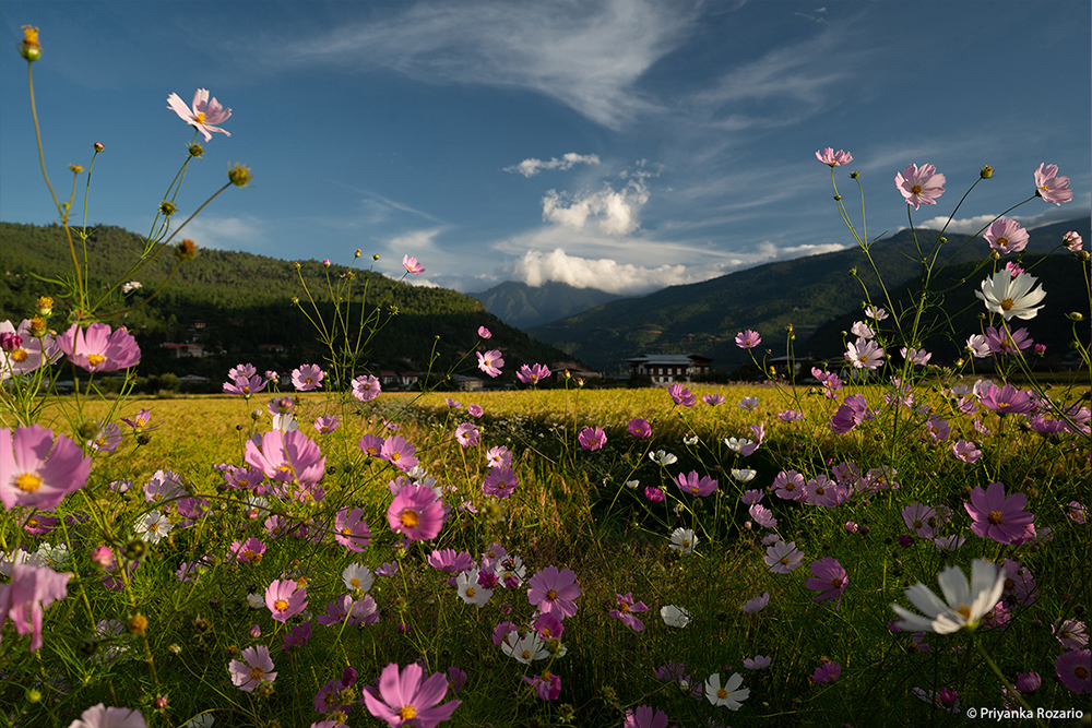 Flowers in a Hilly Countryside - Nature Photography by LLA Alumni Priyanka Rozario